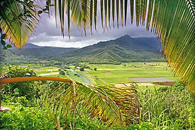 North Shore of Kauai - taro fields